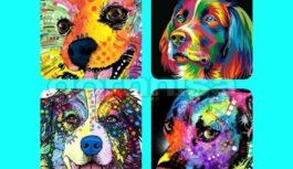 Pārbaudi savu šarmu – izvēlies varavīksnes suni