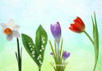 Tests sievietēm – izvēlieties ziedu un uzziniet, kas tevī ir tik īpaši mīļš un jauks